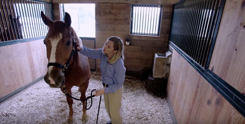 Scoring Your Horse's Body Condition